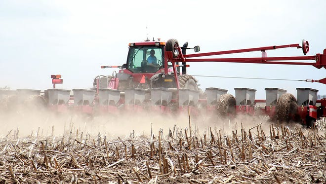 A farmer works to harvest his corn crops.