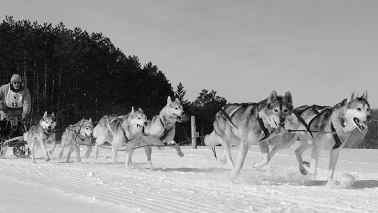 The Camp Ripley Winter Warrior Sled Dog Race features both spring and mid-distance teams.