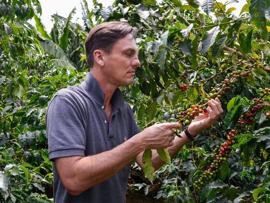 Jim Koenigsaecker looks at coffee plants in the Nyeri