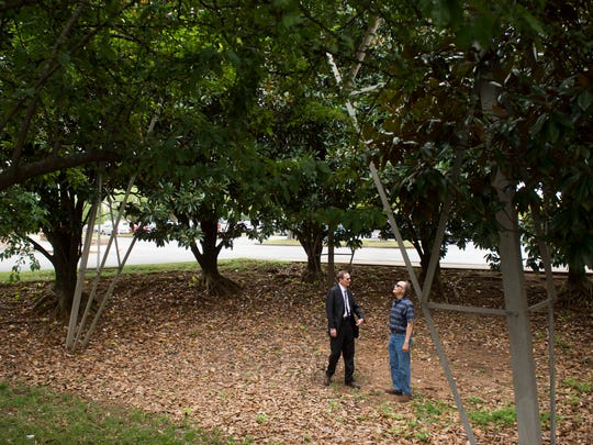 Attorney Donald Vowell, left, and plaintiff Vance Sherwood stand in a grove of magnolia trees beneath a TVA transmission tower in Tuesday, August 1, 2017. On Monday, U.S. District Judge Tom Varlan ruled that the Tennessee Valley Authority cannot employ its so-called 15-foot rule for chopping down trees along utility lines until it submits an environmental impact statement and has that statement approved by the court.