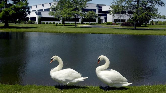 In this 2015 photo, two swans waddle along the banks of a pond at what then was the site of the Fiskars company, formerly L.R. Nelson, at 1 Sprinkler Lane in Peoria. Long a fixture there, the swans were removed when the property changed hands in 2016, but they were returned when OSF HealthCare took over the site.