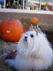 The fall fun on C-Street Saturday includes a pet parade