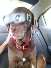 In this picture of Toby, who perished in the Eastpoint fire, he is wearing spy goggles. Melanie Cooper put the goggles on him a joke because she always thought he needed glasses.