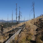 Flagstaff hike: Little Bear Trail rebounds from fire