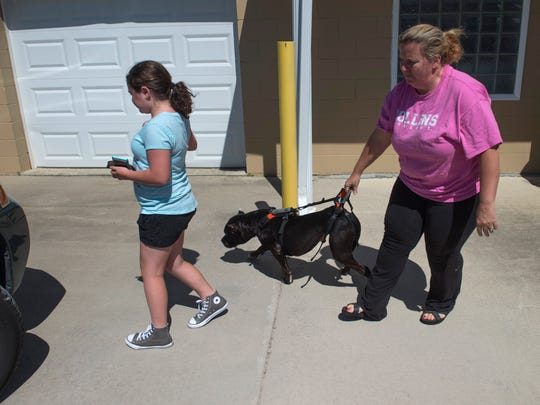 Temporary foster care giver Susan Odoyo, right, helps Ruger back to her vehicle after his therapy session at Companion Animal of Evansville Monday afternoon. Ashlynn McClure, 9, is also helping take care of the dog.