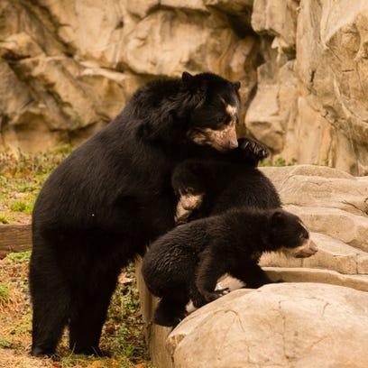 PHOTOS: Bear cub brothers
