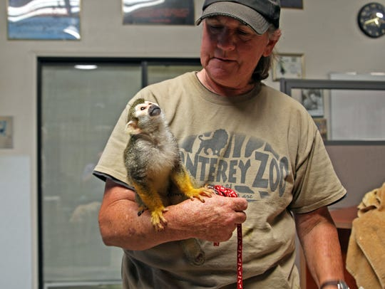Pip, a squirrel monkey, is a new resident of the Monterey