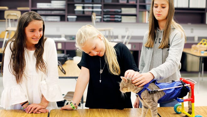 Cane Creek Middle School students Sutton Walker, left, Hayli Owens, center, and Emmy Saltzman watch Clark use the new wheels they designed for the two-legged cat Thursday.