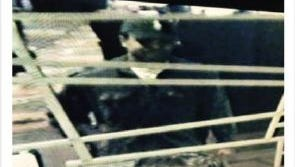 Footage of the man suspected of robbing the Wild Horse Pass Casino in Chandler.