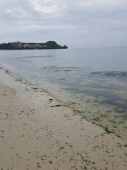 Invasive algae threatens the reef in Tumon Bay, according to the Guam Visitors Bureau.