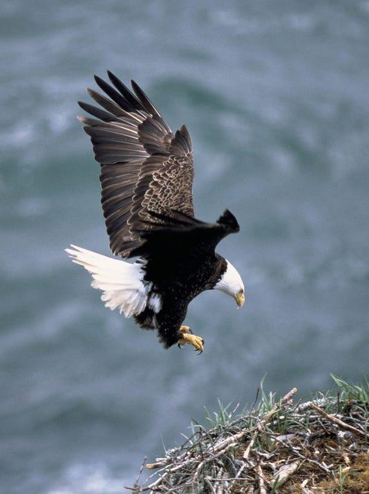 Bur 0810 Eagle