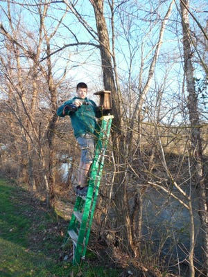 Eagle Scout candidate and Arden resident Michael Fay installs one of his bird houses in Fletcher Park in January. Fay conceived the bird house project about two years ago.