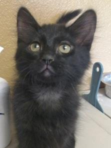 Meet the Current-Argus Pet of the Day, Charcoal.