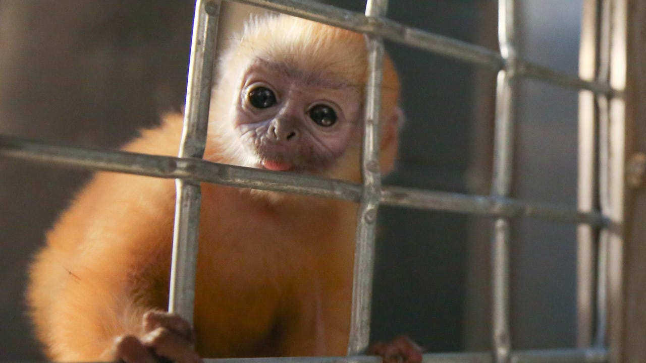 Zoo Knoxville wants your help to name its 2-month-old male baby langur.