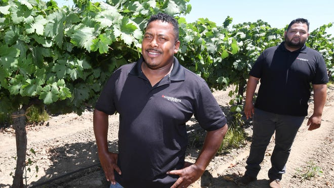 Winemakers Joseph Smith, left, and Christopher Rivera stand in a field of Zinfandel at Klinker Brick Winery located on Woodbridge Road north of Lodi.
