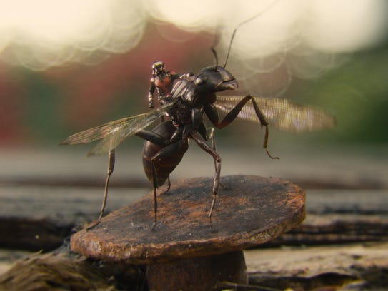 Ant-Man (Paul Rudd) rides his loyal insect steed Antony.