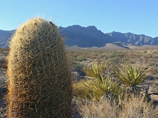 The Providence Mountains in the Mojave Desert are part