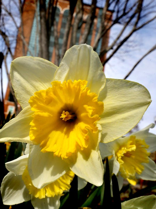01-Spring flower.jpg