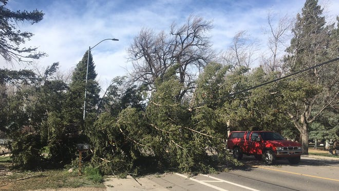 High winds blew a tree down at Taft Hill and Mulberry Street in Fort Collin on Tuesday.