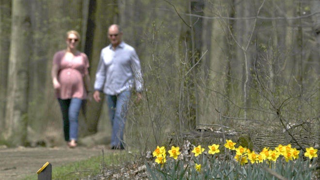 Caitln Zaluski and her father, Michael DelMedico, walk along the H.S. Wagner Daffodil Trail at Furnace Run Metro Park on April 23, 2019, in Richfield, Ohio.