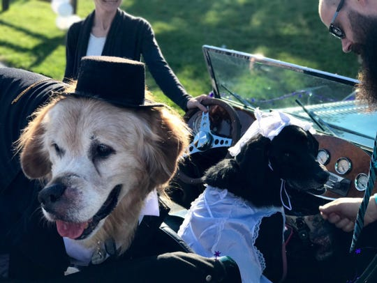 Mr. Molson rides off with his new bride, a black lab