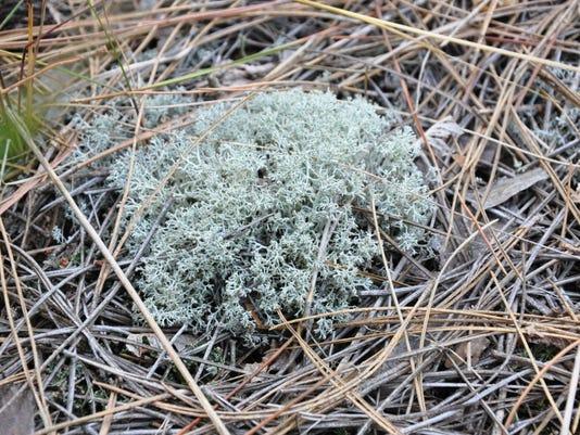 STC 1221 WW lichen.jpeg