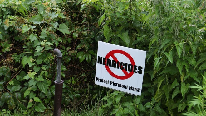 """A neighbor displays a """"no herbicides"""" sign near the Piermont Marsh. Phragmites are visible in the background."""