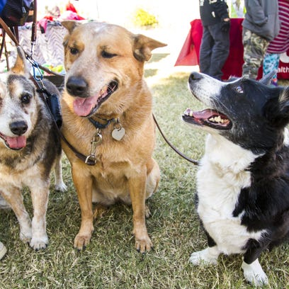Gwen Oswood attends the Doggie Street Festival with