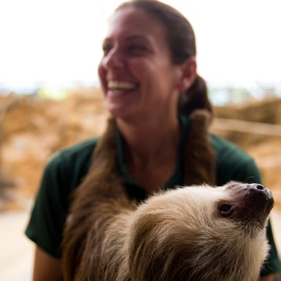 Molly, a two-toed sloth, hangs onto Julie Bragovich,
