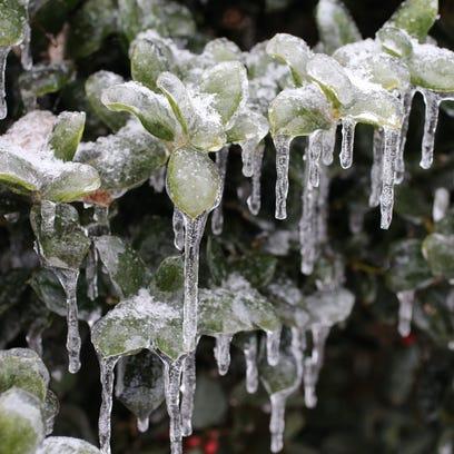 -5- icy holly.jpg_20150218.jpg