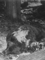 The bear that fatally mauled Kenneth Scott was finally killed feet from where the hunting party sat with a still-conscious Scott.