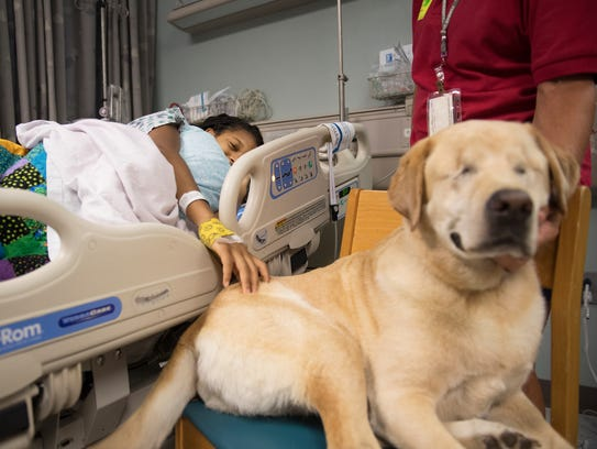 Harley, a yellow lab who lost her eyes to glaucoma,