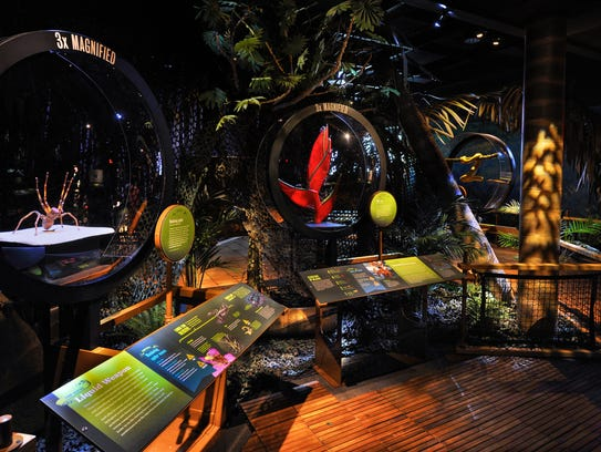 A simulated rainforest, home to many venomous creatures,