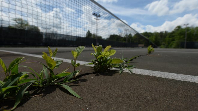 Weeds are growing up through cracks in the tennis courts at Glen Miller Park.