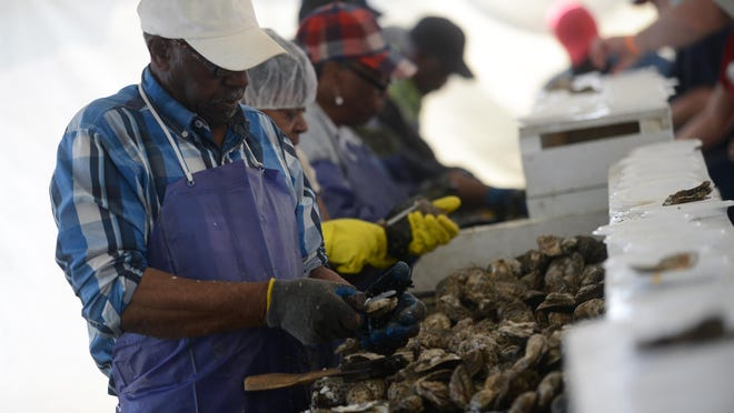 Elwood Taylor shucks oyster during the 2014 Chincoteague Seafood Festival at Tom's Cove Campground on Saturday, May 3, 2014.