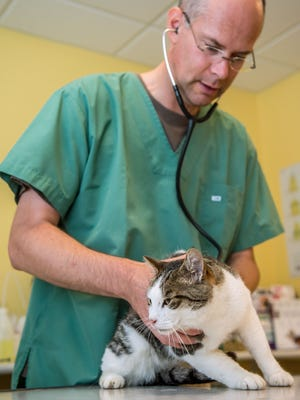 A cat is examined by a veterinarian.