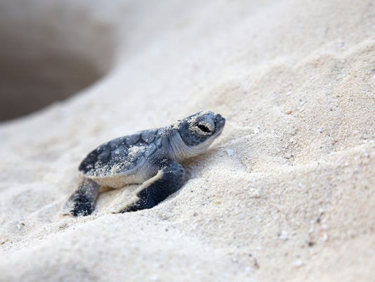 #stockphoto Sea Turtle Stock Photo