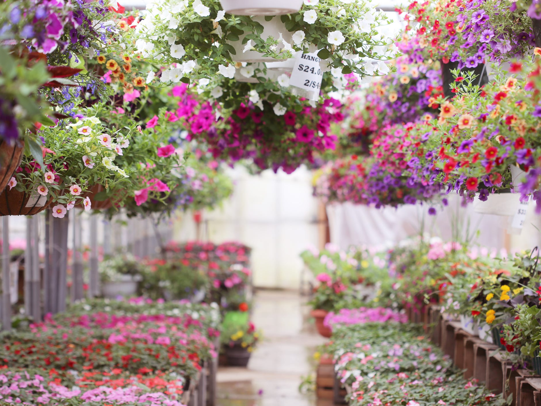 You could win a May Flower Shopping Spree! Enter 5/1-5/29.