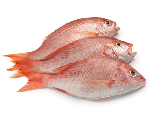 #stock red snapper Stock Photo