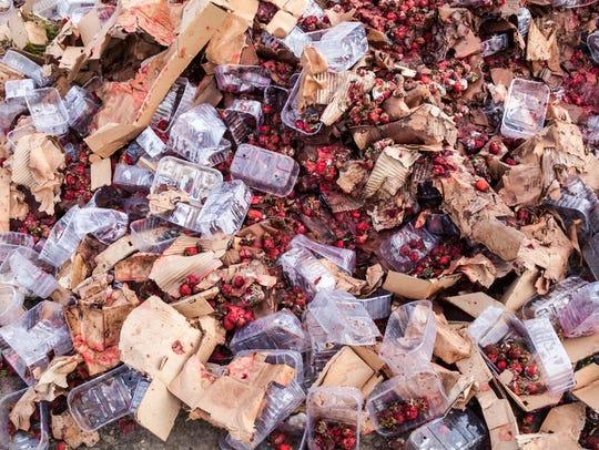 Rotten garden strawberries in a landfill.