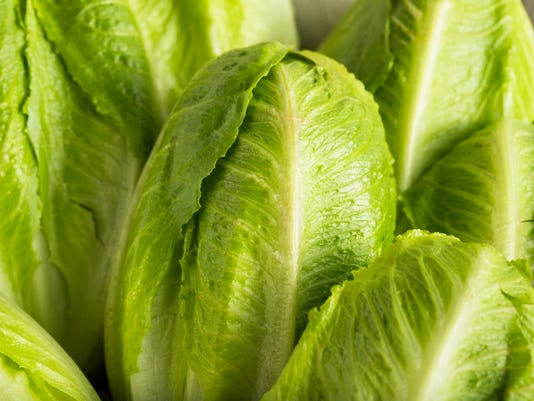 Raw Green Organic Romaine Lettuce