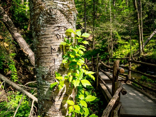 Leaves of three, let them be. Be on the look out for poison ivy when you hit the trail this summer.