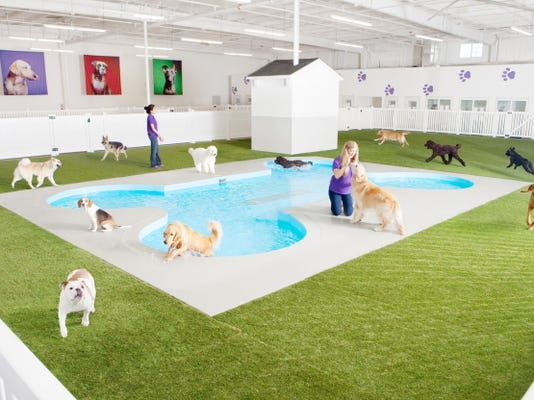 This undated artist rendering provided by Classic Communications courtesy of ARK Development depicts Paradise 4 Paws, a holding area for dogs in a new luxury terminal at New York's John F. Kennedy International Airport. The privately owned ARK, as it's called, will handle the more than 70,000 animals that pass through JFK each year, including dogs, cats, horses, cows, birds, sloths and aardvarks.