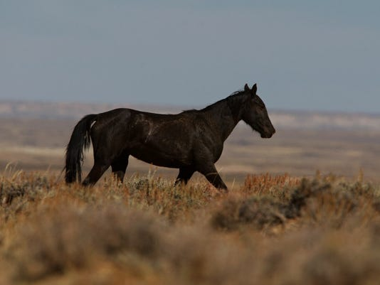 AP WILD HORSE REMOVAL A USA WY