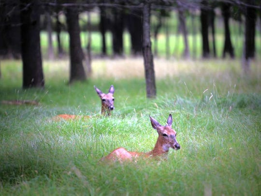 The Saddle River Borough Council is considering conducting an aerial survey to determine the extent of the town's deer population.
