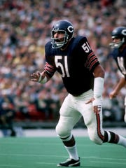 Dick Butkus of the Chicago Bears in action during the 1971 Season.