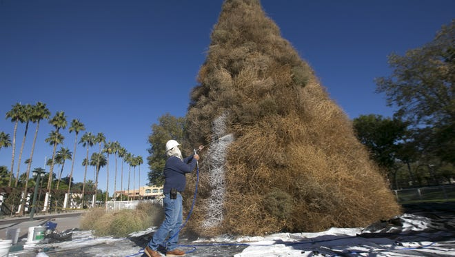 Rob Arends of the Chandler parks department spray paints the annual tumbleweed Christmas Tree white in downtown Chandler.