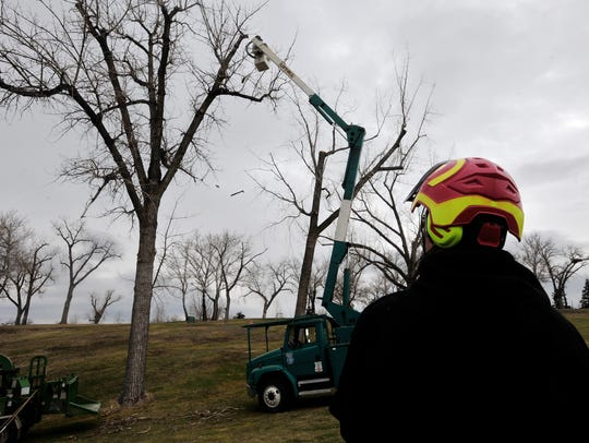 Arborists with the city trim trees at Anaconda Hills