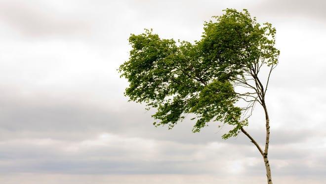Tree ind wind shaped like a heart