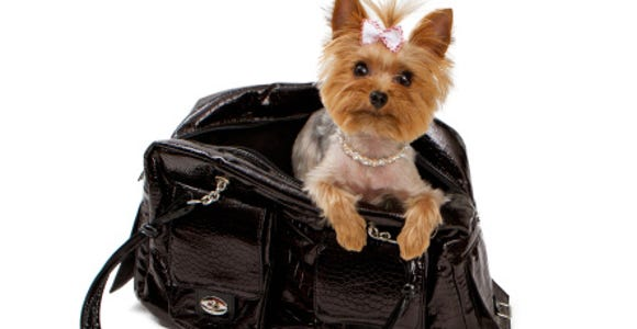 Pets and jets dog in carrier 153513967